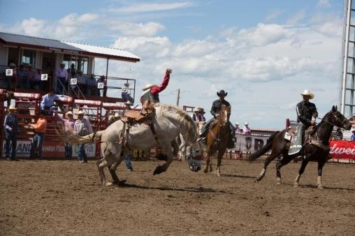 Panoka Rodeo 850
