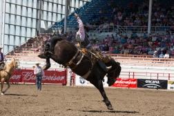Panoka Rodeo 863