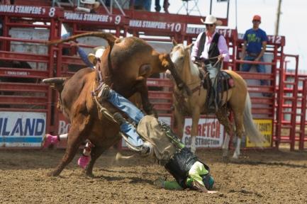 Panoka Rodeo 891