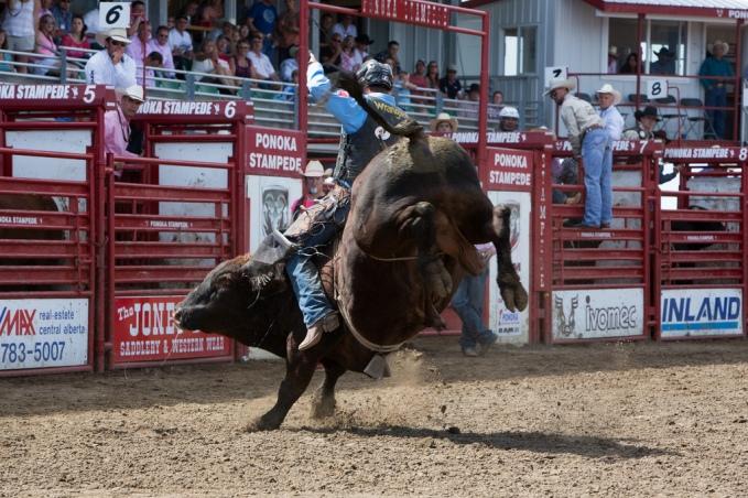 Panoka Rodeo 898