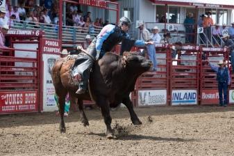 Panoka Rodeo 900