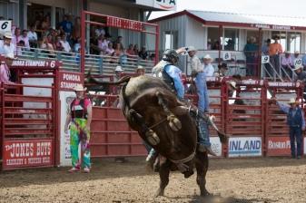 Panoka Rodeo 902