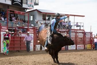 Panoka Rodeo 907