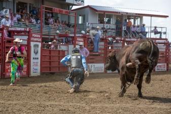 Panoka Rodeo 913