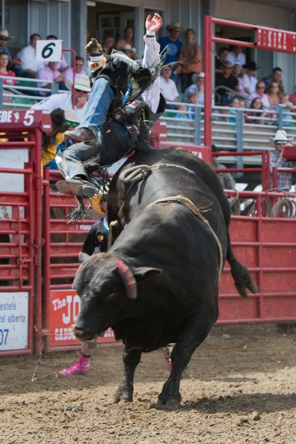 Panoka Rodeo 932