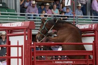 Panoka Rodeo 958