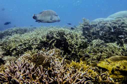 great_barrier_reef-12