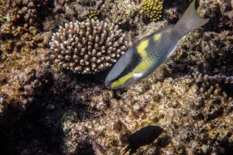 great_barrier_reef-17