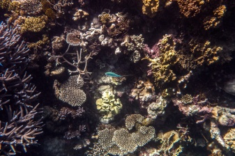 great_barrier_reef-18