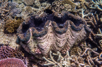 great_barrier_reef-22