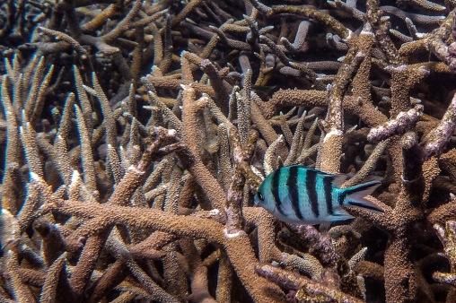 great_barrier_reef-25