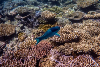 great_barrier_reef-29