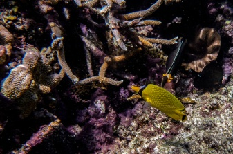 great_barrier_reef-31