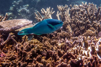 great_barrier_reef-32
