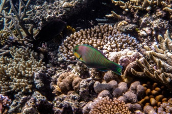 great_barrier_reef-34