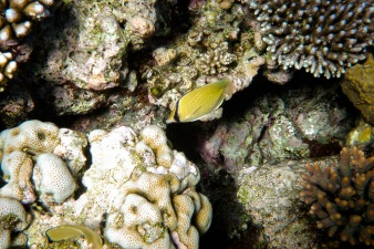 great_barrier_reef-41