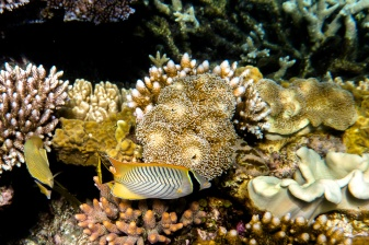great_barrier_reef-42