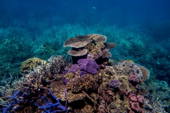 great_barrier_reef-43
