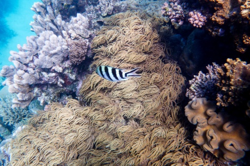 great_barrier_reef-58