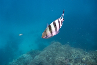 great_barrier_reef-63