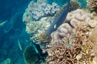 great_barrier_reef_agincourt_reef-1