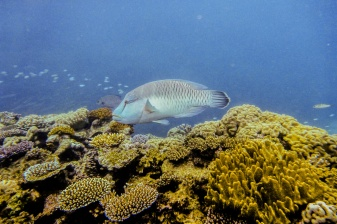 great_barrier_reef_agincourt_reef-10