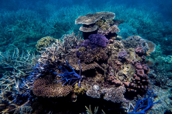 great_barrier_reef_agincourt_reef-19