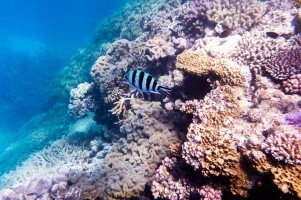 great_barrier_reef_agincourt_reef-21