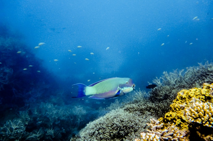great_barrier_reef_agincourt_reef-8