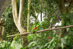 kuranda_birds_butterflies-19