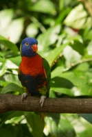 kuranda_birds_butterflies-23