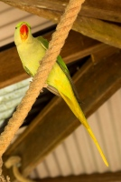kuranda_birds_butterflies-25