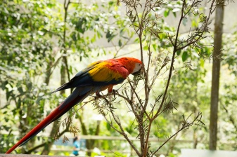 kuranda_birds_butterflies-26