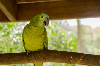 kuranda_birds_butterflies-27