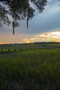 Savannah-1331